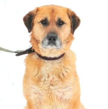 Красавец Грэм - Собаки в добрые руки