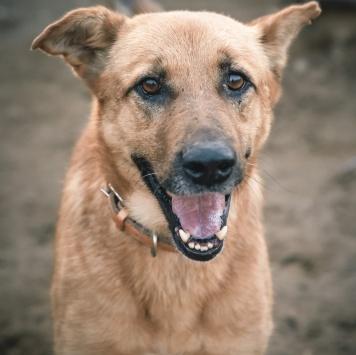 Жулик - Собаки в добрые руки