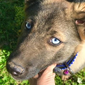Принц - Собаки в добрые руки