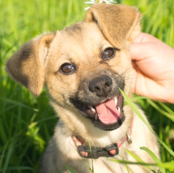 Семи - Собаки в добрые руки