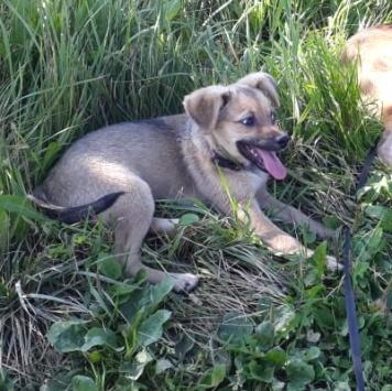 Семи - Найденные собаки