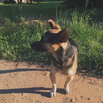 Том - Найденные собаки