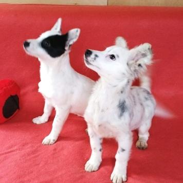 Фая и Диля - Собаки в добрые руки