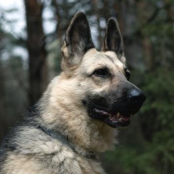 Дайкири - Собаки в добрые руки