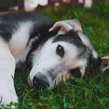 Добрый - Собаки в добрые руки