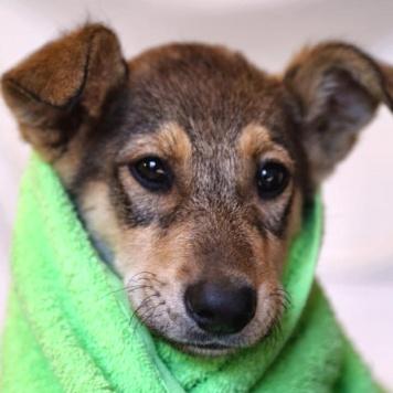 Фунтик - Собаки в добрые руки