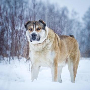 Ниган - Собаки в добрые руки