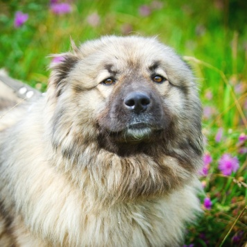 Серсея - Собаки в добрые руки