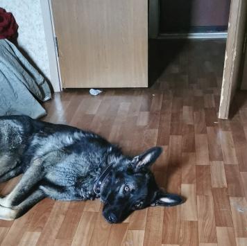 Рекс - Найденные собаки