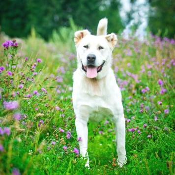 Лекс Лютор - Собаки в добрые руки