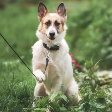 Соня - Собаки в добрые руки