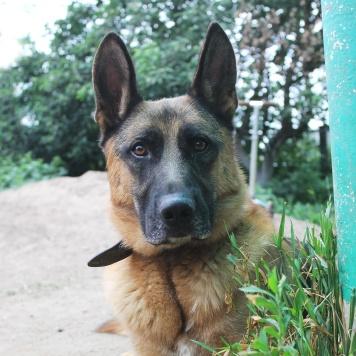 Жордан - Собаки в добрые руки