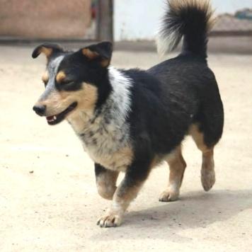 Михей - Собаки в добрые руки