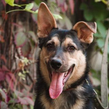 Чаки - Собаки в добрые руки