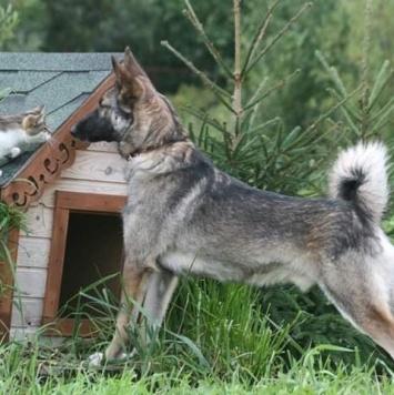 Арман - Собаки в добрые руки
