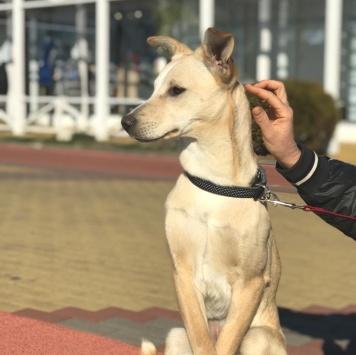Блонди - Собаки в добрые руки