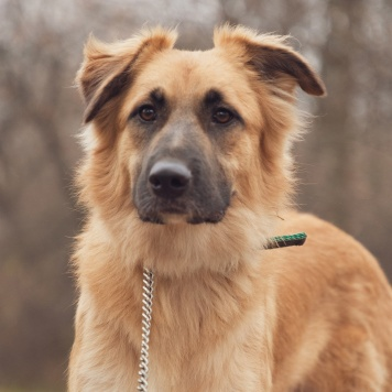 Спарк - Собаки в добрые руки