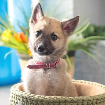 Шила - Собаки в добрые руки