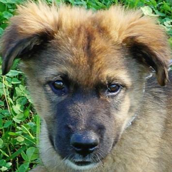 Гайнар - Собаки в добрые руки