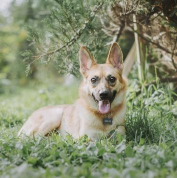 Софи - Собаки в добрые руки