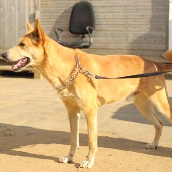 Триша - Собаки в добрые руки