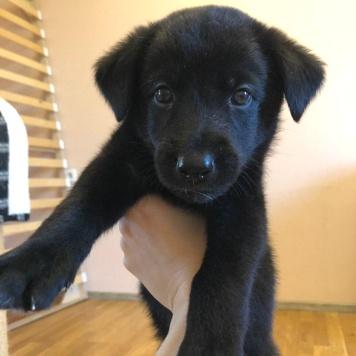 Нейл - Собаки в добрые руки