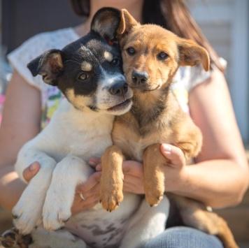 Девочки - Собаки в добрые руки