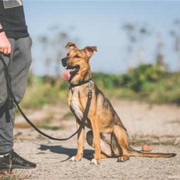Суна - Собаки в добрые руки