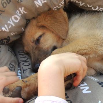 Есения (Сеня) - Собаки в добрые руки