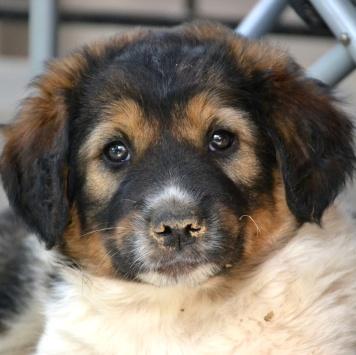 Вьета - Собаки в добрые руки