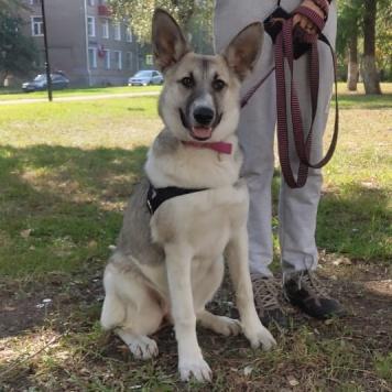 Йота - Собаки в добрые руки