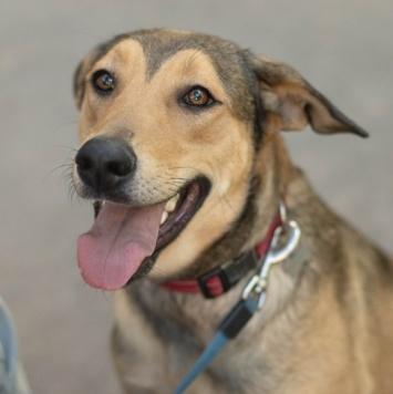 Лукерья - Собаки в добрые руки