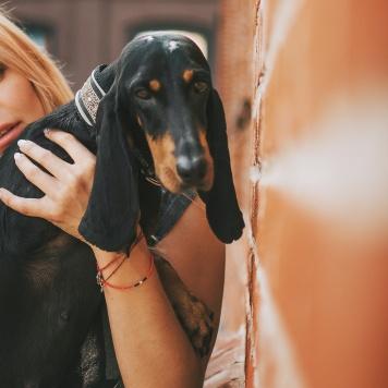 Каникатти - Собаки в добрые руки