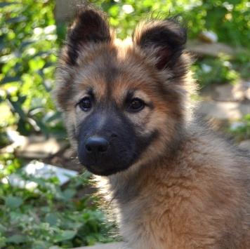 Сабрина - Собаки в добрые руки