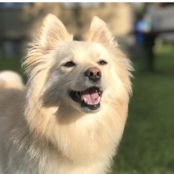 Федя - Собаки в добрые руки