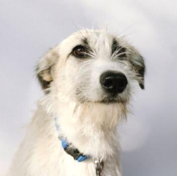 Боня и Кети - Собаки в добрые руки
