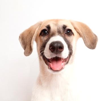Тим - Собаки в добрые руки