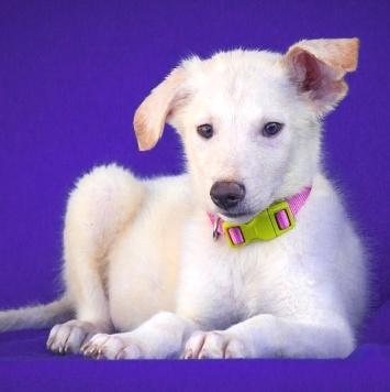 Ромео - Собаки в добрые руки