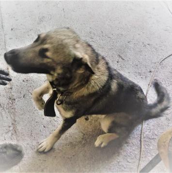 Беня - Собаки в добрые руки