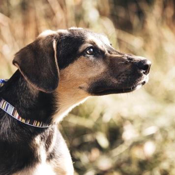 Сара - Собаки в добрые руки