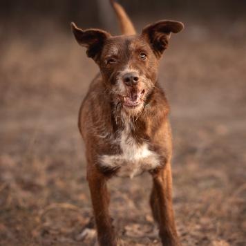 Горыныч - Собаки в добрые руки