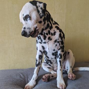 Алекс - Собаки в добрые руки