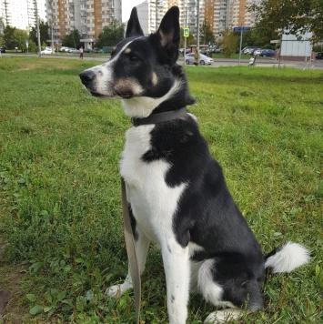 Ремми - Собаки в добрые руки
