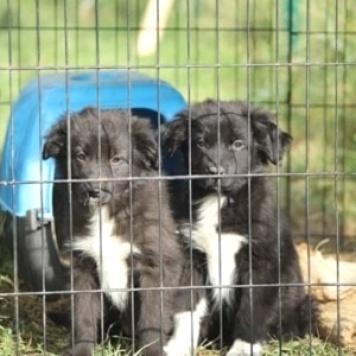 Poзи и Дakoта - Собаки в добрые руки