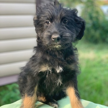 Вилли - Собаки в добрые руки