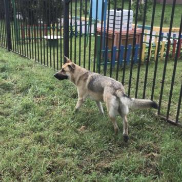 Суперпёс - Найденные собаки