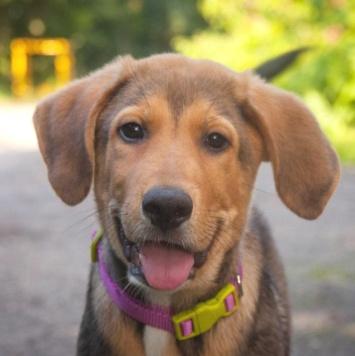 Лордик - Собаки в добрые руки