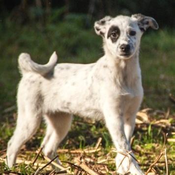 Капля - Собаки в добрые руки