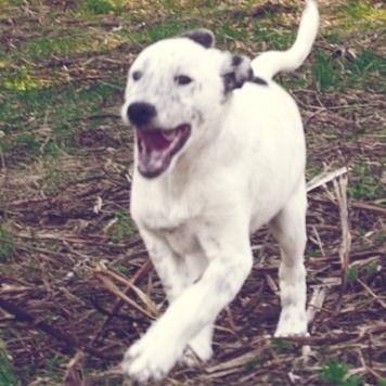 Укроп - Собаки в добрые руки