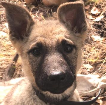 Зая - Собаки в добрые руки
